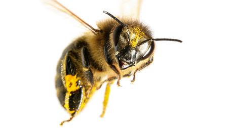 Windham County Beekeepers Club Meeting