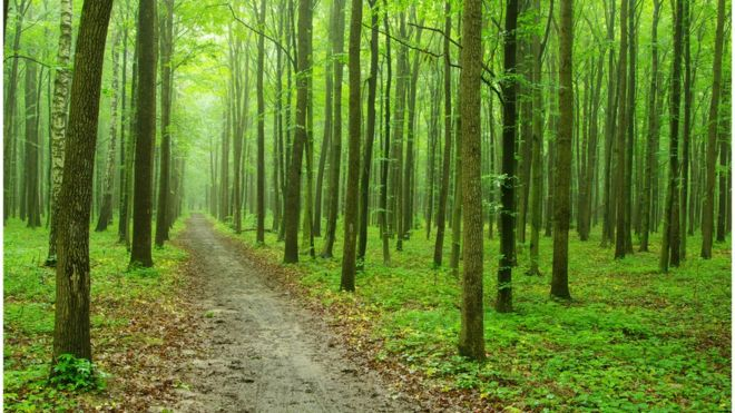 Forestry talk