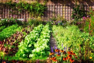 Plan for your garden with Celeste Longacre