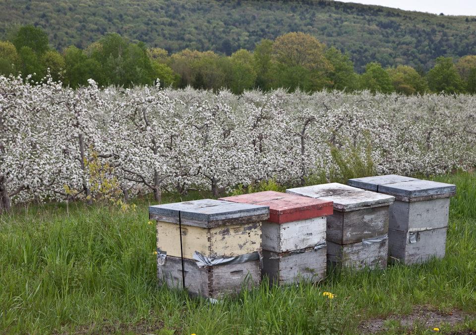 In the Gallery: William Dixon Bees & Beekeeping Exhibit